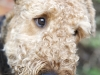 6_angus manchester dog portrait photohgraphy